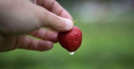 Jordbærdrømmer og brysomme fedre får gjennomslag i vest